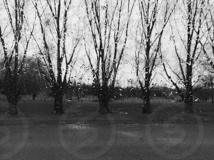 5 trees in field view photo
