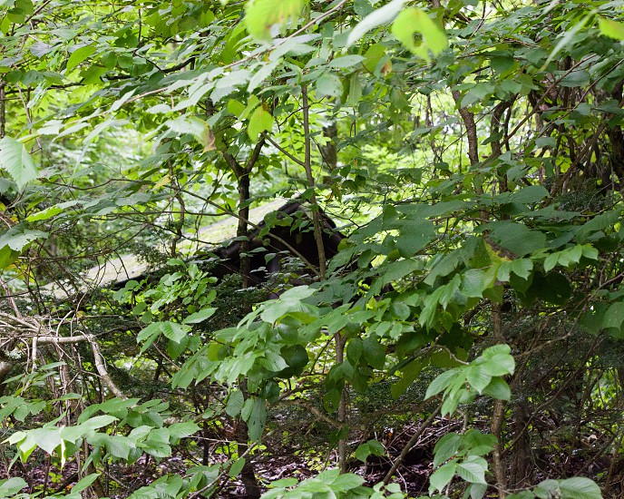 shelter; shelter in the woods; woods; creepy shelter; leaves; trees; lost in the woods photo