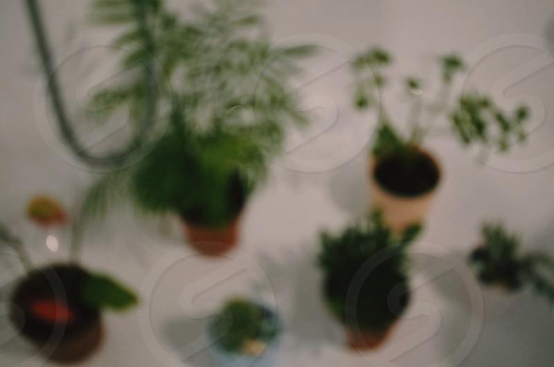 plant.  photo