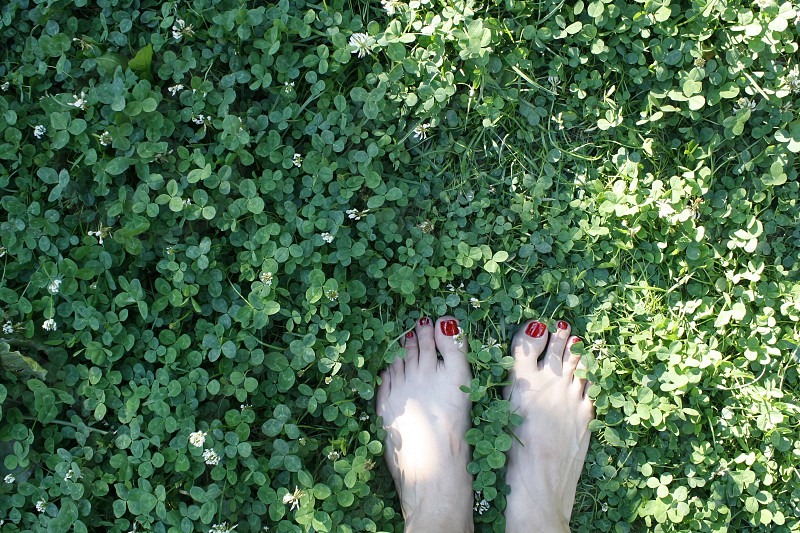 Bare feet on the clover ground photo