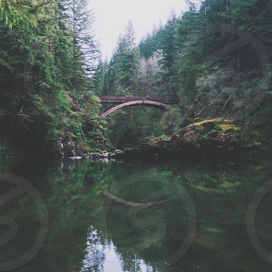 brown wooden bridge and green trees photo