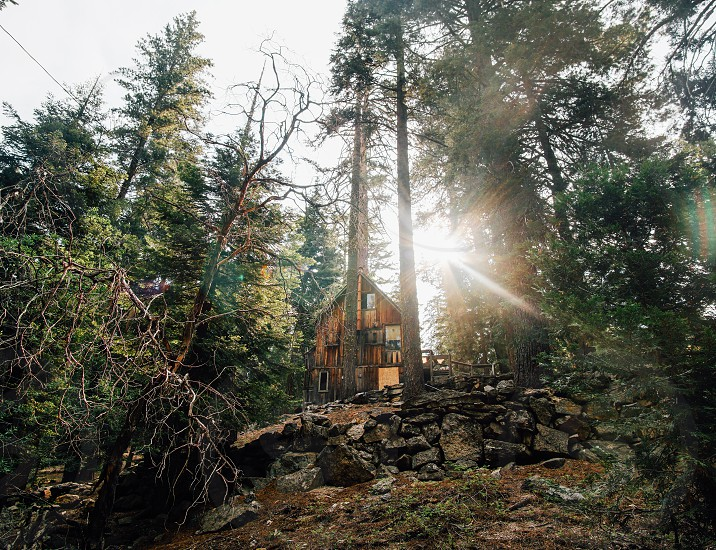 cabin woods trees california sun flare forest nature relax vacation photo