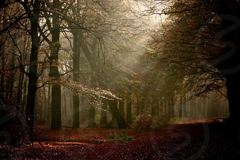 treed area with sun streaming down through leaves photo