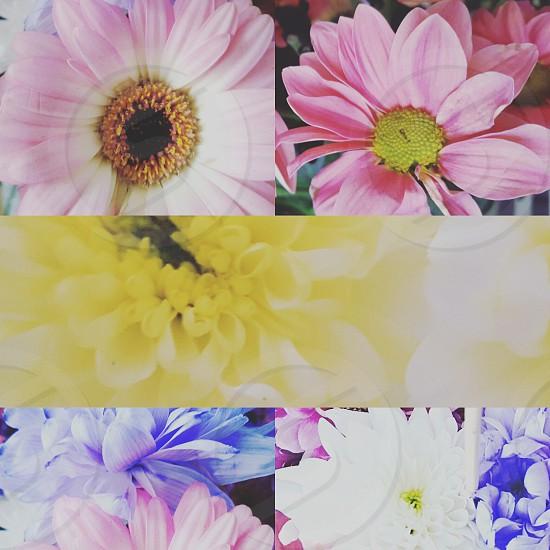 Flowery photo