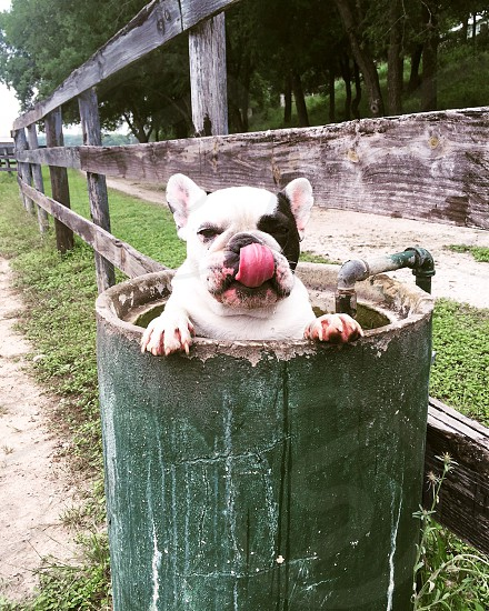 Dog in bucket  photo
