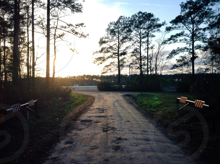 road to forest with sunrise view photography photo