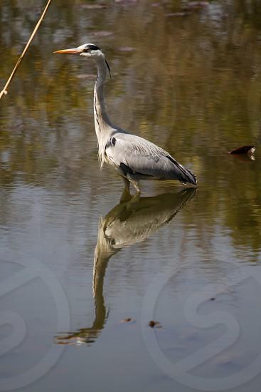Japan Bird in the park photo