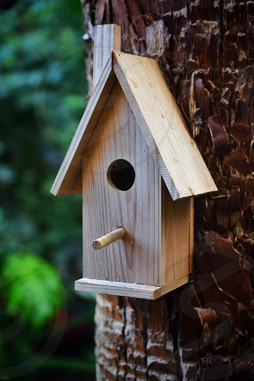 brown wooden bird's house in brown tree trunk photo