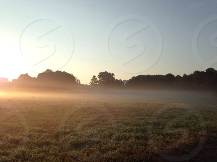 fog in field and trees photo