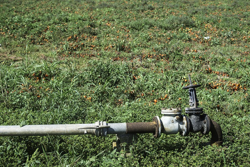 Irrigation pipe on field photo