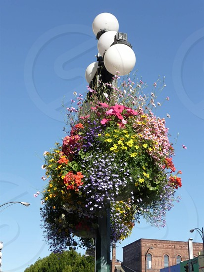 Victoria Light Post Flower Basket photo