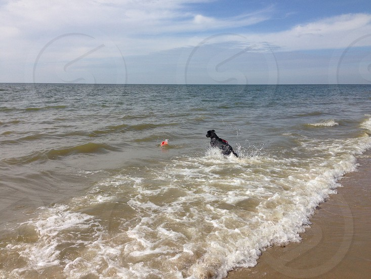 Jumping dog in the sea photo