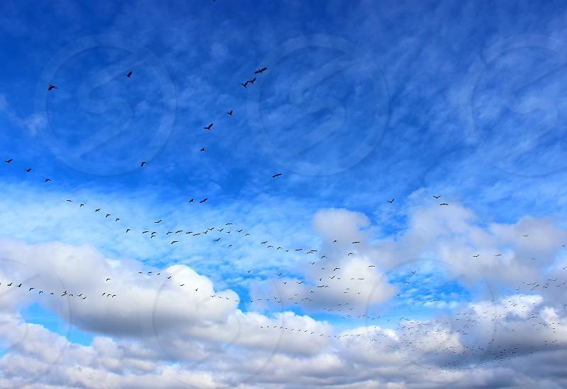 piggeons migration photo
