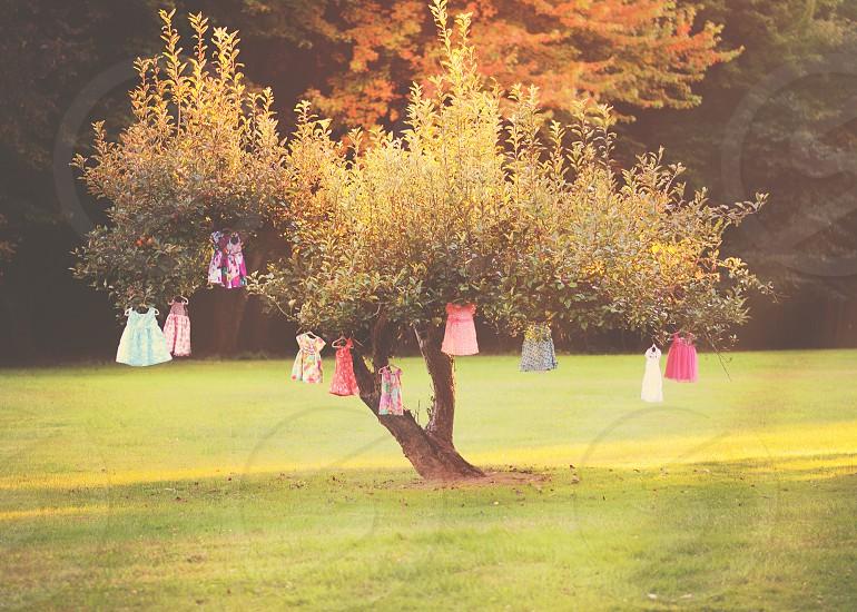 dresses hanged on tree photo