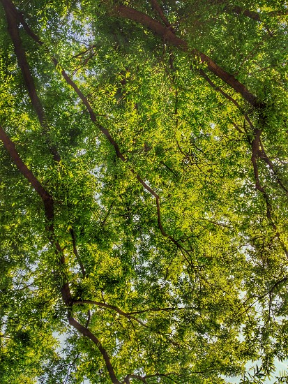 Underneath a tree on the JHU campus in Baltimore Maryland photo