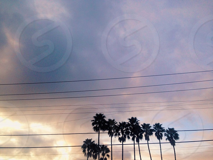 Spring sky clouds sunset palm trees trees California Southern California SoCal photo