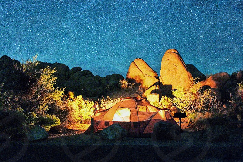 warm lighted tent surrounded by rod and plants under starry cloudless night sky photo