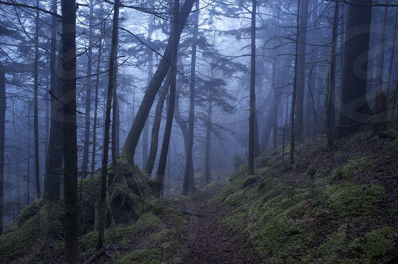 fog in a forest photo