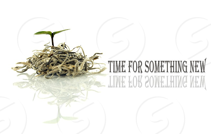 time for something new with little new plant for new life and text and copy space photo