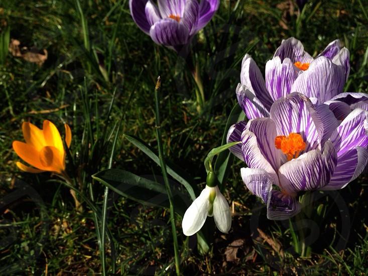 purple petaled flowers photo