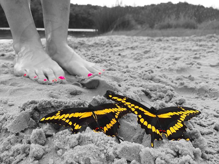 Butterflies beach feet pink yellow photo