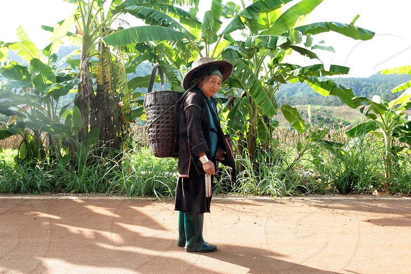 a farming women of the minority of Lahu or Lisu near the village of Chiang Dao in the north of chiang mai in the north of Thailand in Southeastasia.  photo