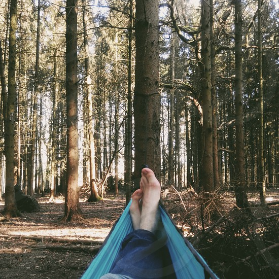 relax forest trees hammock travel photo