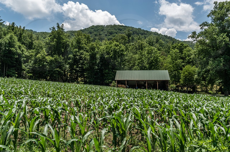 Western North Carolina New Corn Fields Mountains Shed Blue Sky Clouds Scenic photo