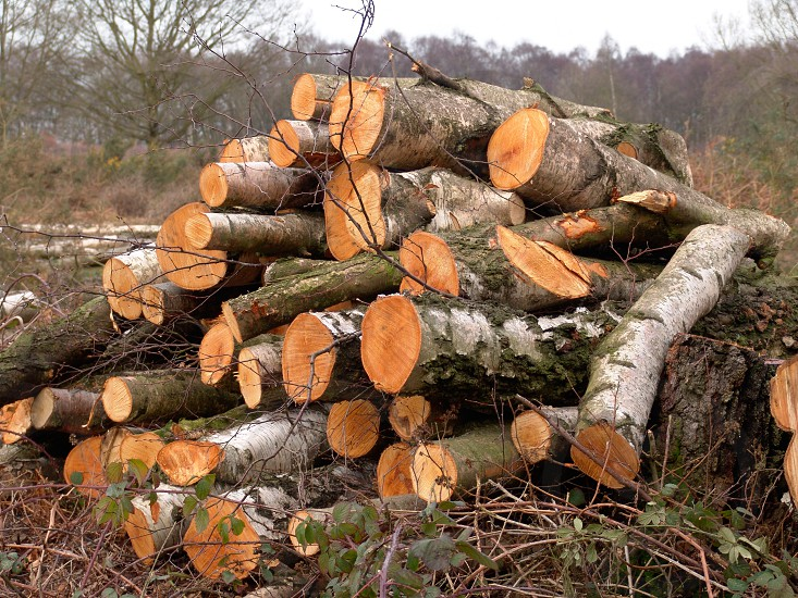 Logs • chopped • woods • forest • deforestation • pile photo
