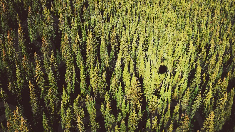 green pine trees aerial view photo