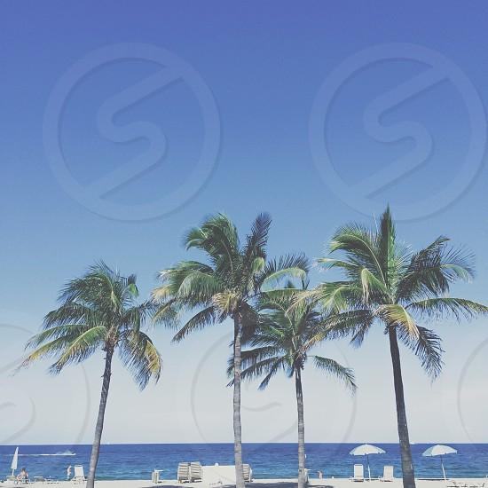 Fort Lauderdale FL photo