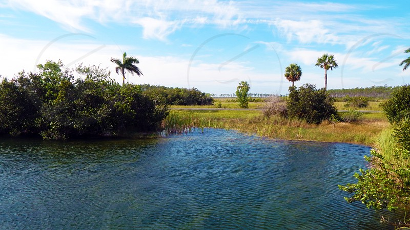Everglades National Park in Florida photo