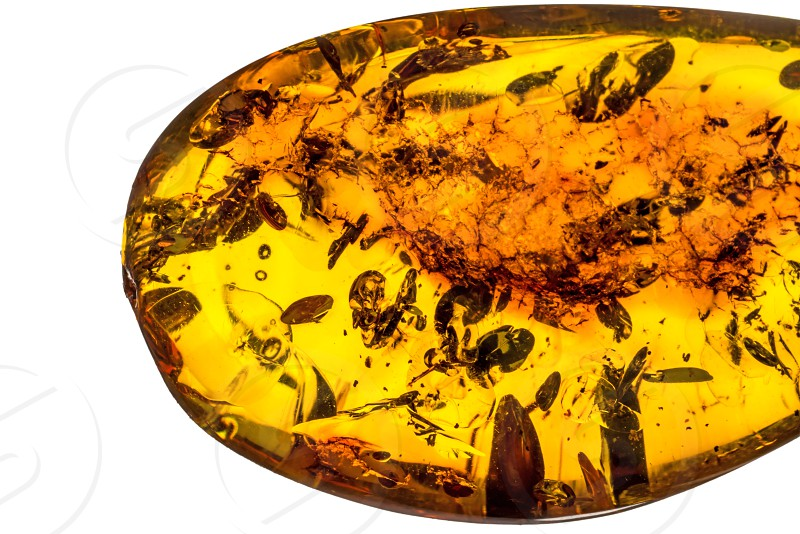 amber with inclusions photo