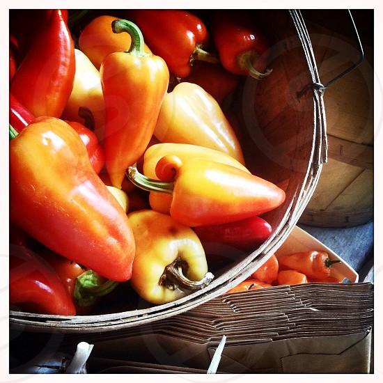 orange red pepper  photo