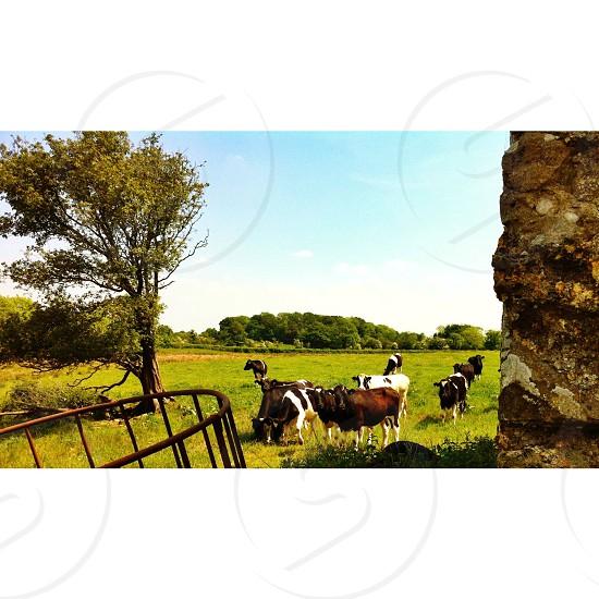 farm view photo