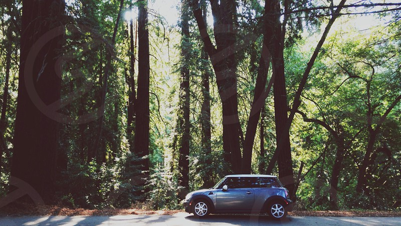 gray and black minivan near trees photo