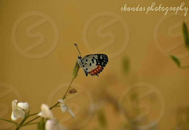 We delight in the beauty of the butterfly but rarely admit the changes it has gone through to achieve that beauty. photo