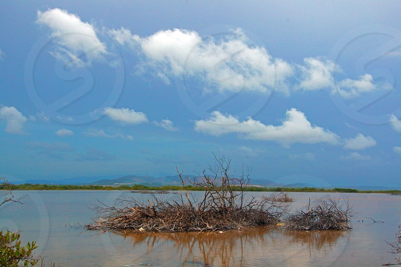 brown grass on water photo