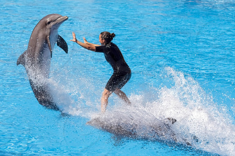 Dolphin Show at Loro Parque photo