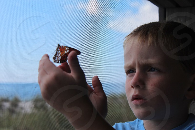 boy beach butterfly curious concentrate photo