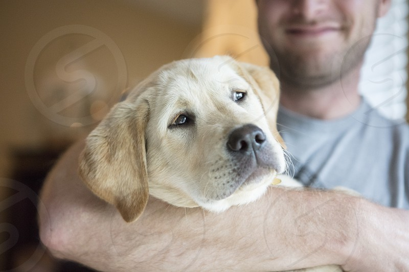 Puppy lab pet dog photo