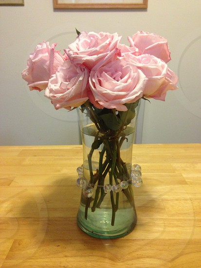 Flowers plant roses pink vase photo