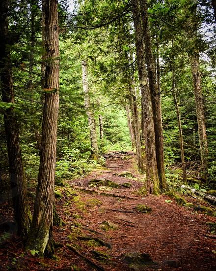 Superior Hiking Trail Minnesota  photo