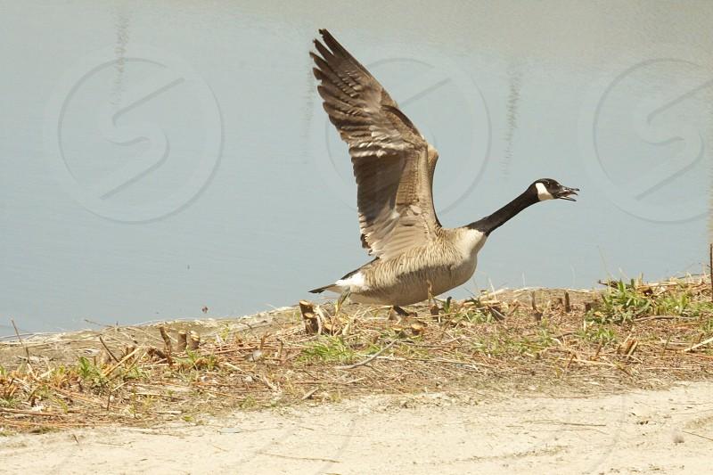 duck near body of water during daytinme photo