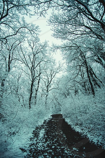 winter snow cold outdors outside path pathway woods forest trees dirt ground photo