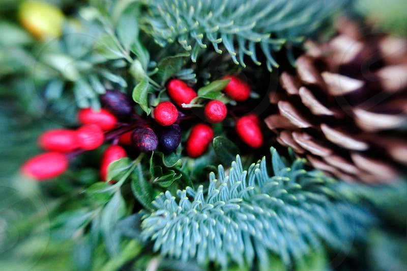 Christmas holiday plants pine pinecone photo