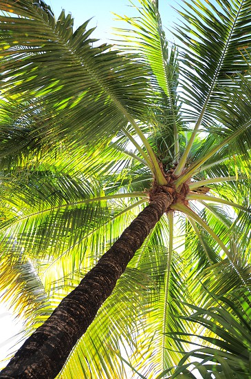 green coconut tree during daytime photo