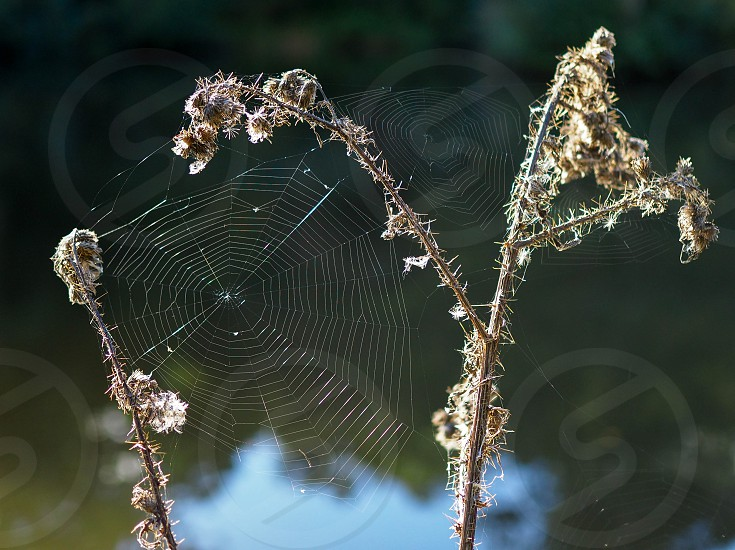 Spider's Webs in the Sussex Countryside photo