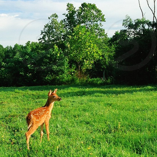 deer walking on green grass photo
