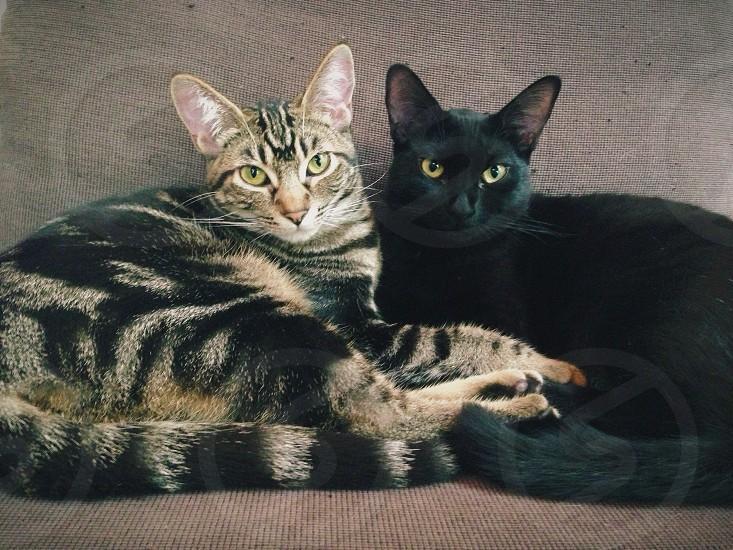2 cats lying photo